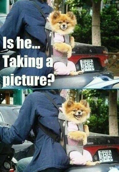 Kiss Me Dog Meme - 108 best images about funny dogs on pinterest funny first kiss picture and animals