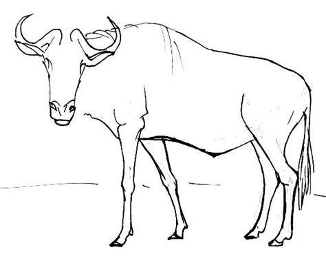 How To Draw A Wildbeast