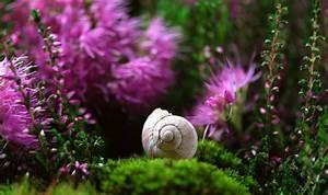 Kleine Laubbäume Für Den Garten : kleine g rten gestalten gartenideen f r kleine g rten ~ Michelbontemps.com Haus und Dekorationen