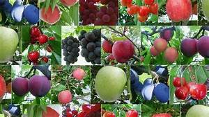 Factors to consider when starting an orchard enterprise ...