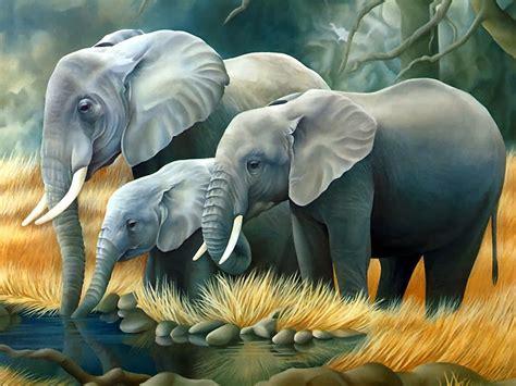 wallpapers  elephant photography hindi motivational