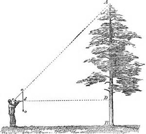 measuring tree height clipart etc