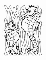 Seahorse Coloring Pages Sea Horse Printable Seahorses Animal Fish Drawing Cartoon Sheets Monster Bestcoloringpagesforkids Tail Creatures sketch template