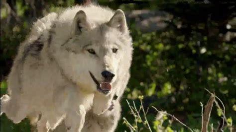 blue buffalo blue wilderness tv spot puppy spirit