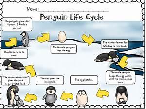 Penguins Non
