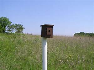 Blue Jay Barrens  Memorial Day Nest Box Check