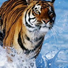 Best Mix Tigers Images Animals Beautiful