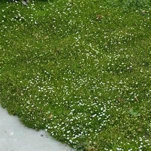 Pflanzkörbe Für Blumenzwiebeln : naturagart shop sternmoos online kaufen ~ Lizthompson.info Haus und Dekorationen