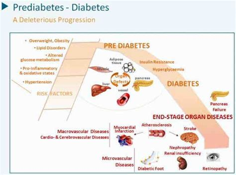 diabetes sugar level   salemfreemedclinic diabetes