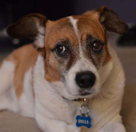 Things You Shouldnt Say To A Senior Dog Owner Grouchy  Ee  Puppy Ee   Blog