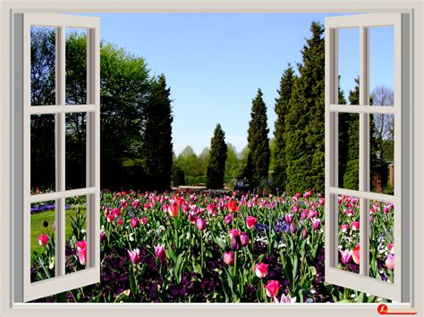 images sky lawn window home spring red
