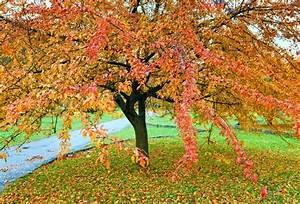 Baum Mit Roten Blättern : gro er baum mit roten und gelben bl tter im goldenen herbst stadtpark stock foto colourbox ~ Eleganceandgraceweddings.com Haus und Dekorationen