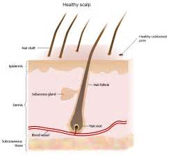 Clear the scalps pores so that hairs are free to grow - NiceHair Ketoconazole Topical