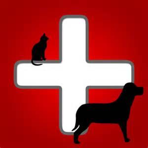 animal hospital emergency emergency alameda animal hospital