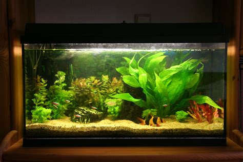 fish aquariums amazing fish tanks choosing the right fish tank for you