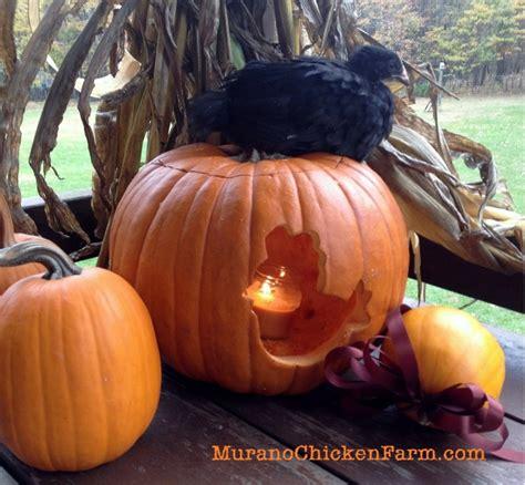 Can Guinea Pigs Eat Pumpkin Seeds can chickens eat pumpkin seeds amp guts backyard poultry