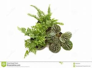 Grünpflanzen Im Topf : zimmerpflanzen mit gr nen bl ttern im topf lizenzfreie ~ Michelbontemps.com Haus und Dekorationen