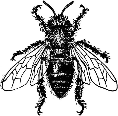Cartoon Drawing Honey Bee Pencil Drawing Collection - vintage bee colony clipart