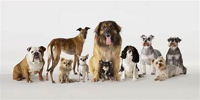 Dogs Breeds Dog Compassionate Breed Pets Pet