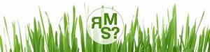 Gelber Klee Im Rasen : was ist rsm bzw eine regel saatgut mischung ~ Markanthonyermac.com Haus und Dekorationen