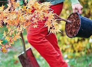 Quand Planter Lavande Dans Jardin : quand planter quoi ~ Dode.kayakingforconservation.com Idées de Décoration
