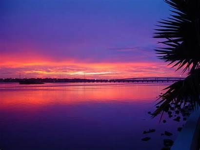 Sunset Beach Palm Purple Daytona Wallpapers Tree