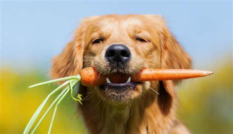 wurzeln fuer hunde hunde kausnacks magazin
