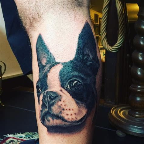 boston terrier tattoos   pictures
