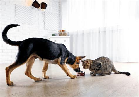angepasste ernaehrung von hund und katze  braucht mein