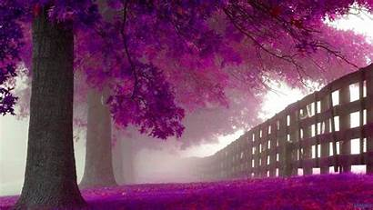 Purple Wallpapers Pink Autumn Cave