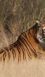 5 Must-See Wildlife Sanctuaries in India - Geringer Global ...