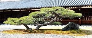 Zen Garten Planung Umsetzung Von LuxuryTrees