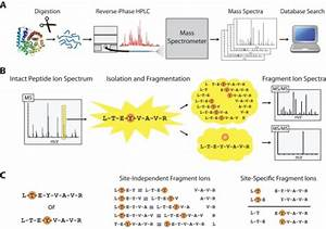 Tandem Mass Spectrometry  Ms  Ms  Analysis Of Protein Ph