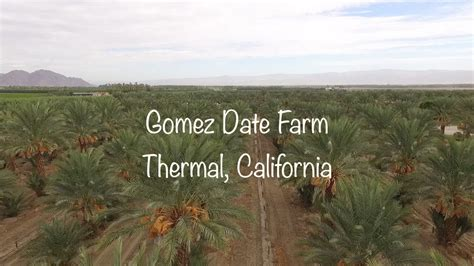 phoenix agrotech medjool date farm thermal california