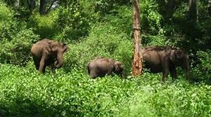 Forest Ecosystem Animals | www.pixshark.com - Images ...