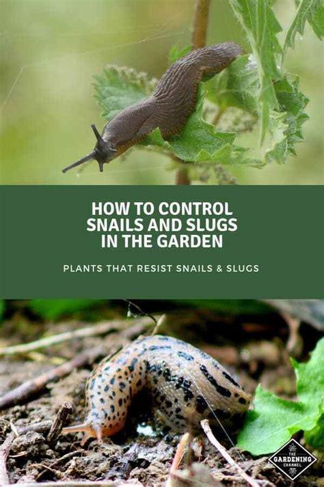 control snails  slugs   garden gardening
