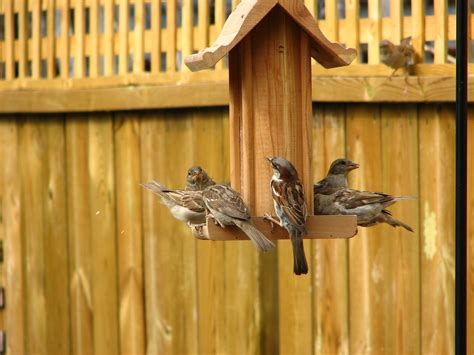how to get rid of sparrows effective wildlife solutions