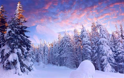 Snow Background Snow Forest Wallpaper 61 Images