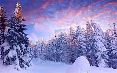 Snow Trees Landscape Nature Forest Winter Desktop