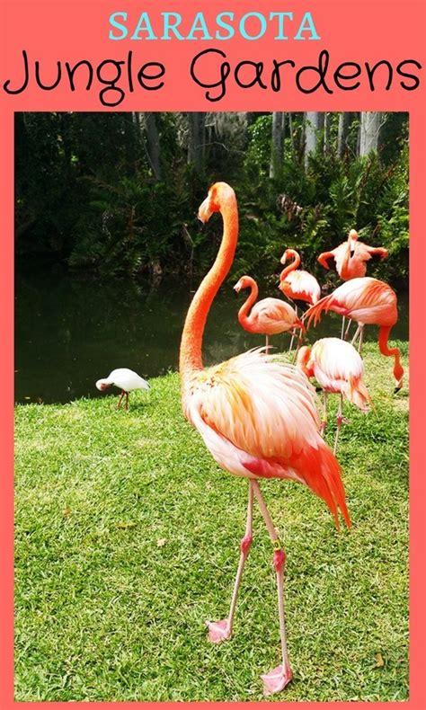 Jungle Gardens Sarasota by Sarasota Jungle Gardens Explores Southwest Florida