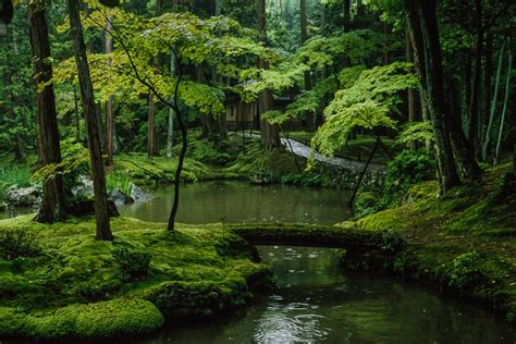 Japanischer Garten Moos by Moss Garden Just Another