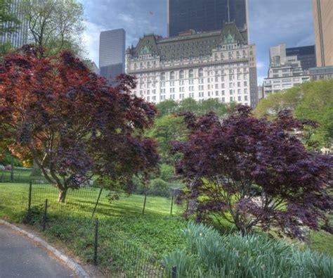 Secret Garden Central Park by Central Park Reopens Secret Garden