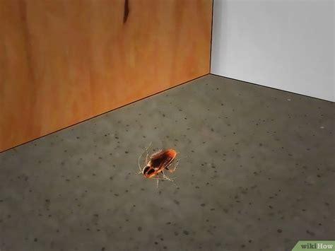formas de matar insectos caseros wikihow