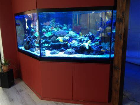 cr 233 ation d un aquarium d eau de mer