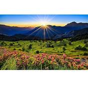 Landscape Nature Pink Flowers Green Grass Meadow With Sun
