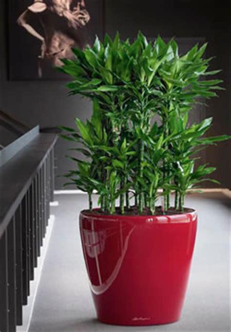 Zimmerpflanzen Die Wenig Licht Benötigen by Drachenb 228 Ume