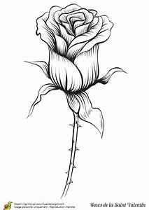 Dessin De Rose Rouge Dessin Rose Rouge Photo De Fleur Une Pensee