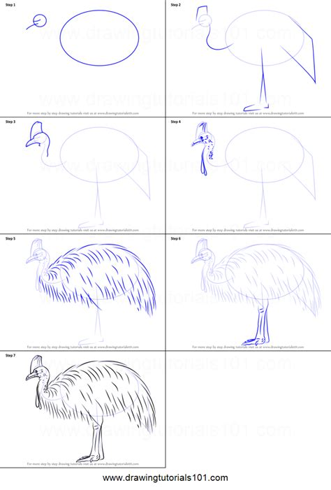draw  southern cassowary printable step  step