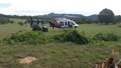 az bureau white mountain apache tribe helps bust big marijuana operation