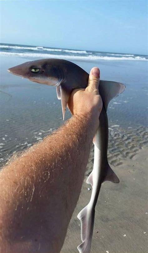 baby shark   cute expression luvbat
